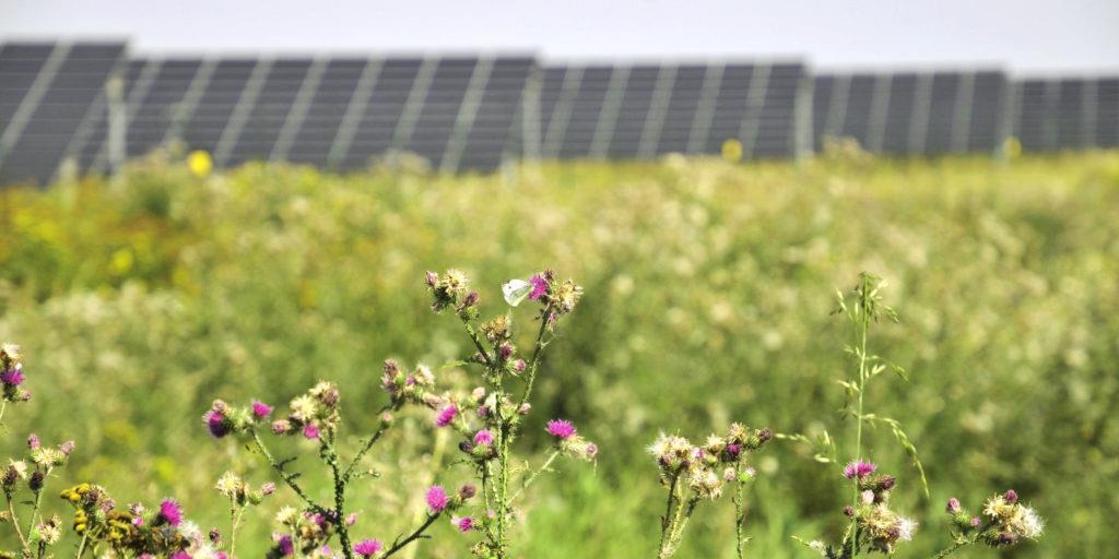 0.27元/千瓦时:德国太阳能招标中标价创最低纪录