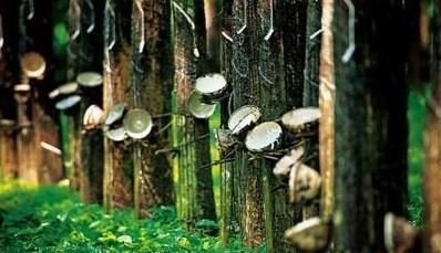 全球天然橡胶产量仍处增产周期